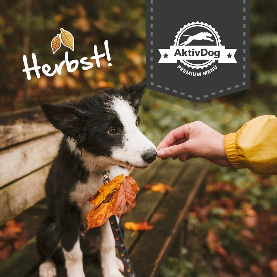 Heute ist Herbstbeginn – Vierbeiner lieben das Tollen im Herbstlaub